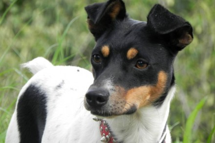 ADANA perro bodeguero jovén