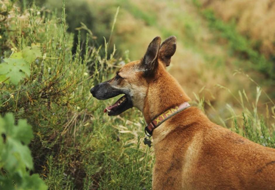 ADANA Protectora Animales Alella