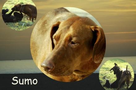 ADANA protectora de animales Alella