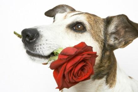 ADANA Protectora Animales Alella Sant Jordi
