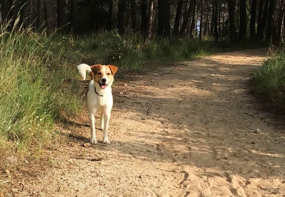 ADANA Protectora Animals Alella
