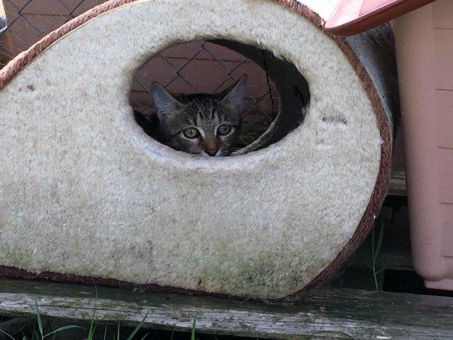 ADANA Protectora Animals Alella Maresme