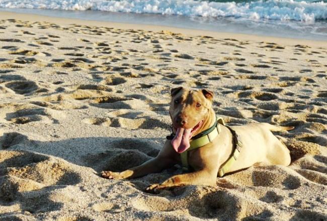 ADANA Protectora Animales Alella Maresme