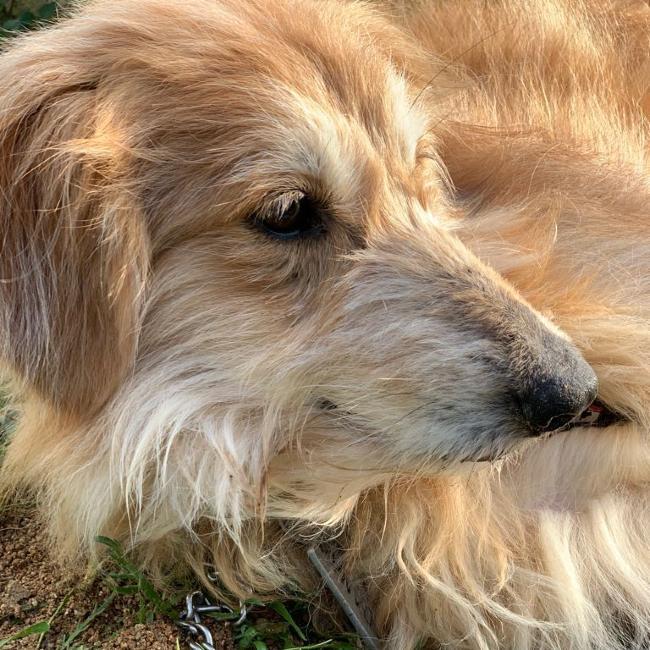 ADANA Protectora Animales Alella adopcion